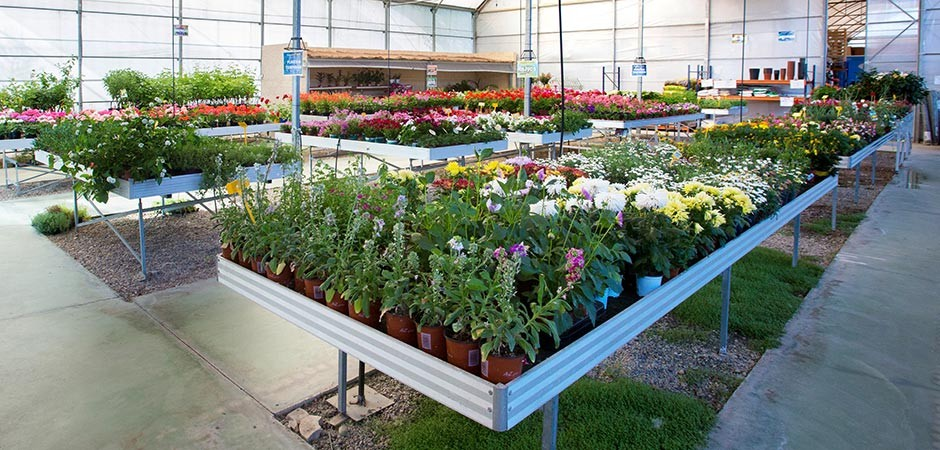 Augusta jard n centro de jardiner a en calatayud zaragoza for Articulos para jardineria