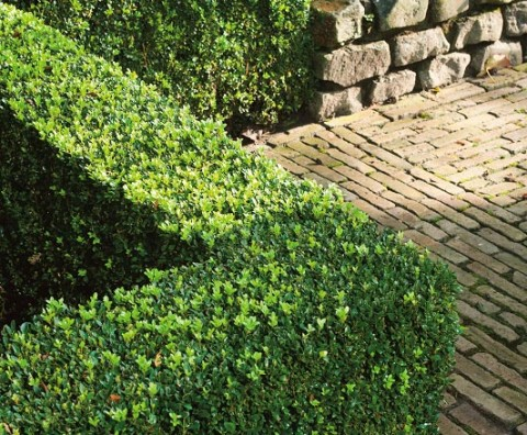Construye bonitos setos en tu jard n con nuestras plantas for Plantas arbustos jardin