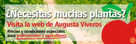 Augusta Viveros
